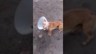 Смешной пёсик
