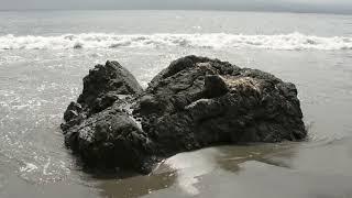 Video MAGIC MUSHROOM moře