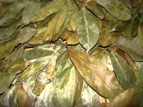 การลบพืชจาก Polypore ช่วยขจัดปรสิต