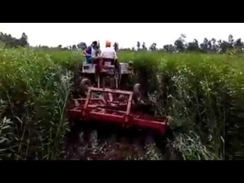 Mulching of Green Manure