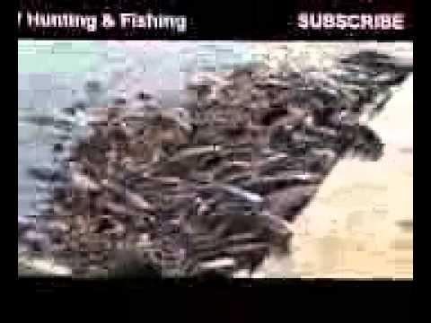 Смотреть Ловля Рыбы Зимой - Сон Ловля Рыбы
