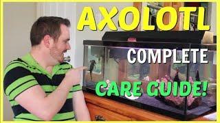 AXOLOTL COMPLETE CARE GUIDE!