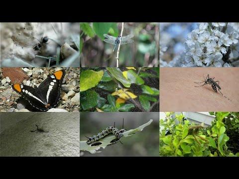 Ricevimento di un trikhopol a lyambliya - La migliore medicina da helminths
