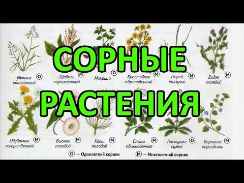 Сорные растения - методы (меры) борьбы
