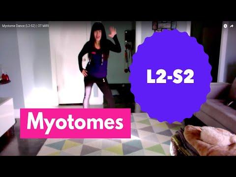 Myotome Dance (L2-S2)