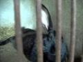 Mes animaux en vidéo & les travaux du poulailler