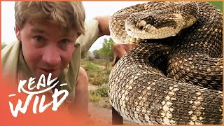 The Fifth Deadliest Snake In The World | With Steve Irwin | Wild Things Shorts