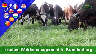Innovative grazing – All-season grazing in Brandenburg (Paul Costello farm)