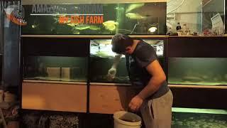 Субботний день аквариумиста  Часть 2 -  танцы с бубном