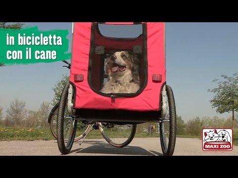 TUTORIAL: In bici con il cane | Maxi Zoo