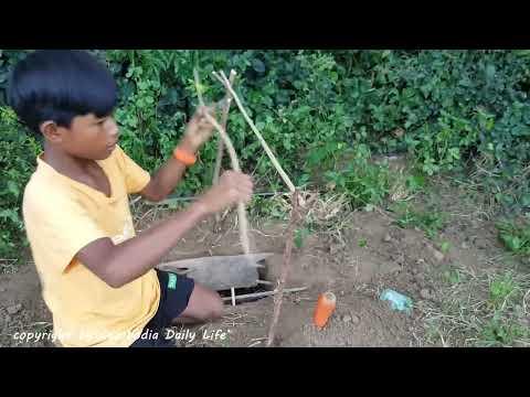 Past na zajíce