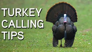 TURKEY CALLING TIPS   Turkey Sounds and What They Mean