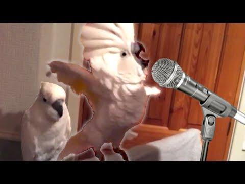 Veja os pássaros mais engraçados de todos os tempos!
