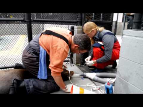 A Day in the Life of The Marine Mammal Center