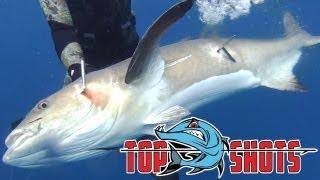 Top Shots - Spearfishing Series - Ian Brookes - Australia