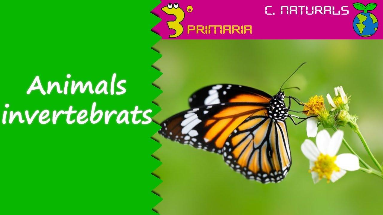 Ciències de la Naturalesa. 3r Primària. Tema 5. Animals invertebrats