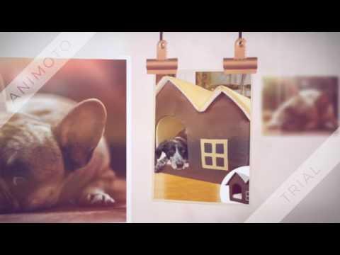 Hundehöhle - Ist der schönste Schlafplatz