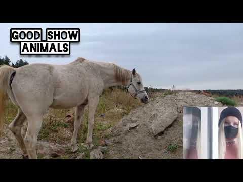 , title : 'Stallion on the Farm Horse Breeding / History