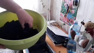 Смотреть онлайн Как на подоконнике вырастить грибы (шампиньоны)