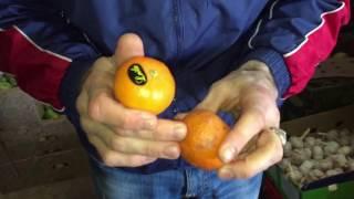 Как выбрать качественные фрукты и овощи на рынке.
