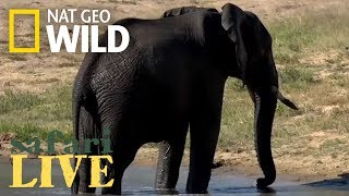 Safari Live - Day 90 | Nat Geo Wild
