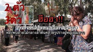 ฮือฮา!! ชาวบ้านแห่ส่องเลขเด็ดจากต้นยูคา คล้ายรูปร่างหญิง