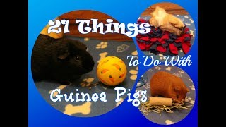 21 Things To Do With Guinea Pigs
