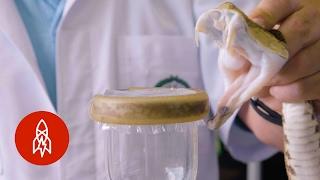 This Lab of Snake Venom Is Saving Lives