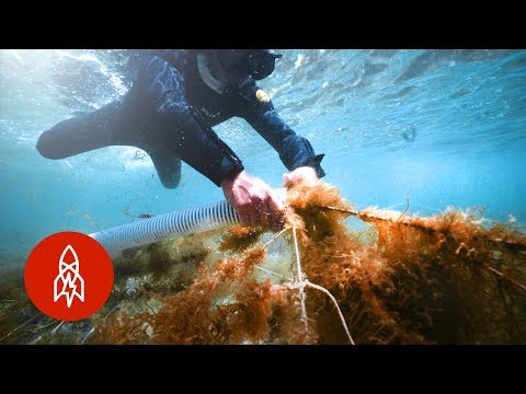 How a Japanese Seaweed Delicacy is Farmed