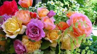 تحميل اغاني آمال حسين .. أحلام الزهور.wmv MP3