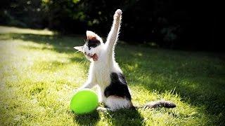 Смотреть онлайн Подборка: Коты взрывают воздушные шарики