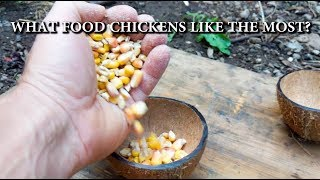 What Food Chickens Eat the Most? Best Food for Chicken - Chicken Feed Test