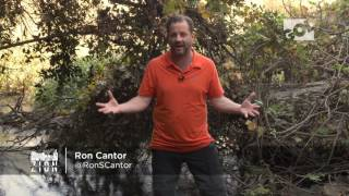 How the Tribe of Dan Missed God: Out of Zion with Ron Cantor 2017
