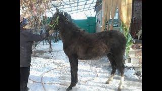 Купи коня Конный портал Свердловской области