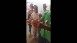 patti walay kabootar for sale in karachi - Video hài mới full hd hay