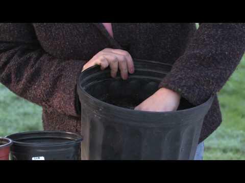 , title : 'Gardening Tips : Transplanting Tulips