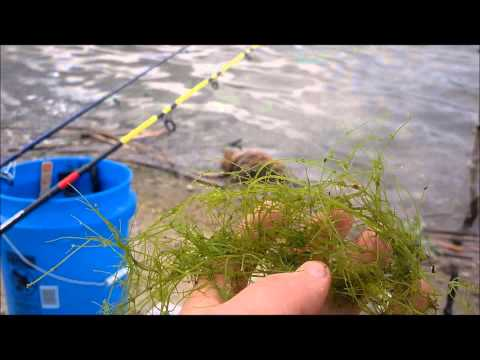 Fishing Tip: CatFishing in a pond with weed bed bottom