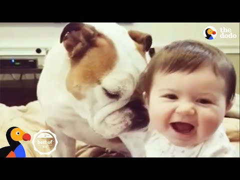 FUNNY ANIMAL VIDEOS + Cutest Animals that Will Make You Laugh | The Dodo BEST OF