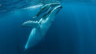 Tales by Light: Las imágenes de Darren Jew junto a las Ballenas Jorobadas