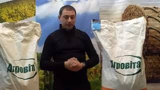 Гибрид кукурузы ДН ПИВИХА ФАО 180, Урожайность 12,0 т/га, Семена кукурузы с хорошей влагоотдачей и морозостойкостью. от компании ТД «АВС СТАНДАРТ УКРАЇНА» - видео 2