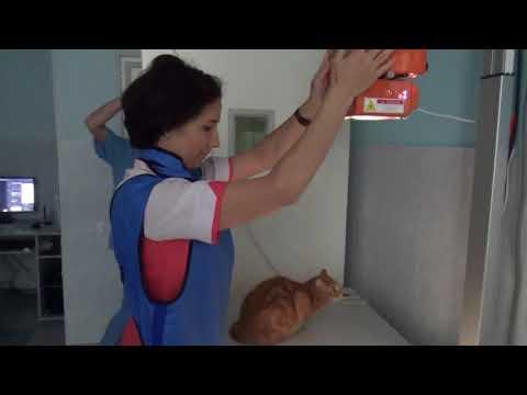 Рентген коту для обнаружения инородки