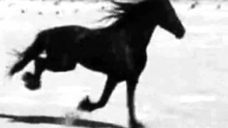 marissa nadler - stallions