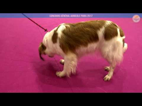 Voir la vidéo : Ring Canins du 01 mars 2017, partie 3