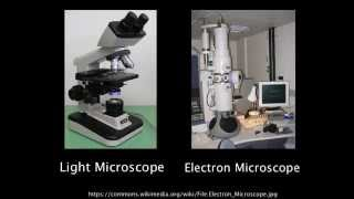 1.2 Resolution of electron microscopes versus light microscopes