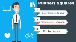 Punnett Squares The Basics