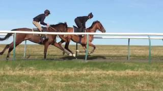 D'Gentle Reflexion (Gentlewave) 4 year old gelding in training with Warren Greatrex