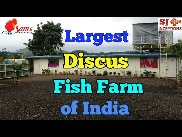 India's Largest Discus Fish Farm - Sams Discus India