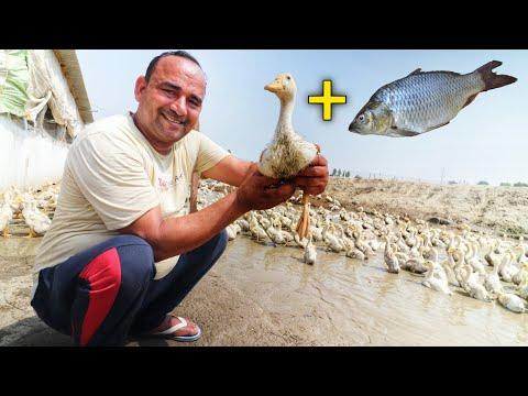 मछली+बत्तख रख कर की10 एकड़ से ज्यादा कमाई SS Duck and fish farm KARNAL HARYANA IN INDIA