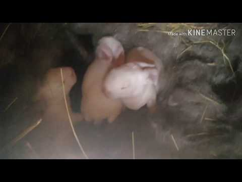 Крольчата смотрим им уже неделю