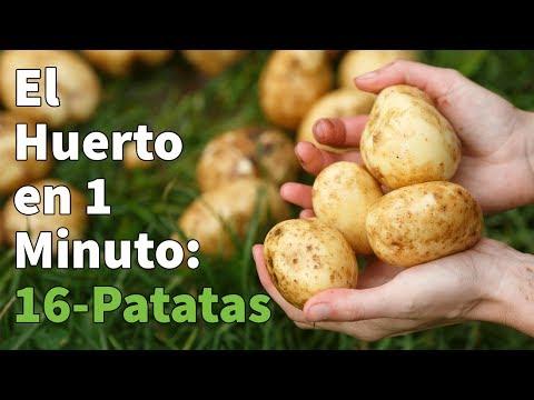Patatas para siembra Red Pontiac 10 Kg
